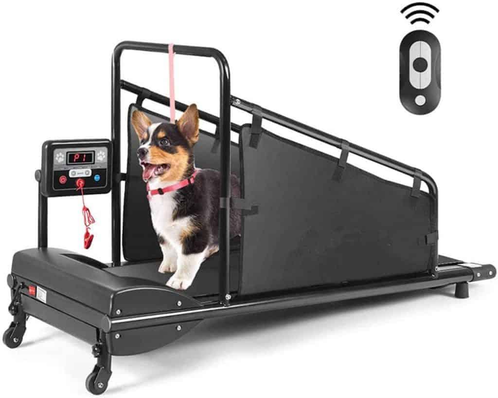Pet treadmill