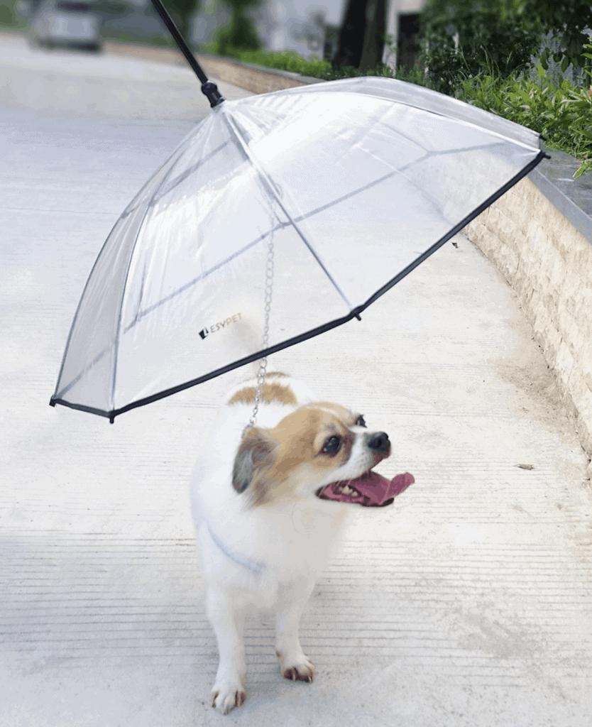 dog umbrella with leash